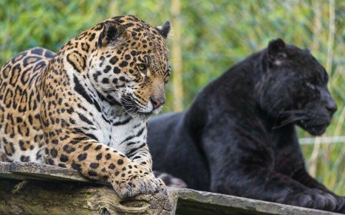 Как животные создают свои семьи
