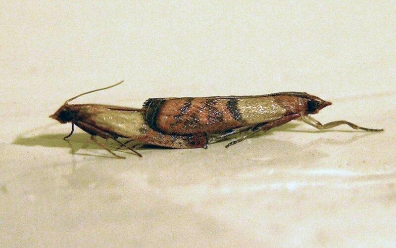 Экологические проблемы помогут решить черви, питающиеся пенопластом