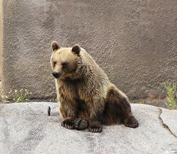 Медведь йог: утренние упражнения в зоопарке Финляндии