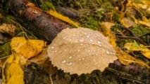 пейзаж, осенний пейзаж, фото пейзажи, пейзажи природы, картинки пейзаж, красивые пейзажи, листья, листопад, дождик, капли воды