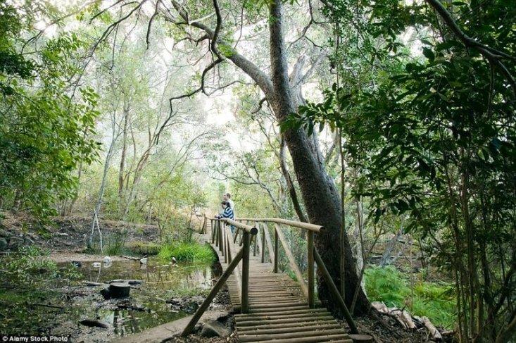 Ботанический сад Кирстенбош, ЮАР. Ботанический сад Кирстенбош был основан в 1913 году на месте бывшей фермы неподалёку от Кейптауна у подножия Столовой горы.