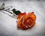 weddings, floral, green, arrangement, romance, pink, pattern, vibrant, leaf, splashing, wave, smoke, ideas, art, cocaine concentration concept