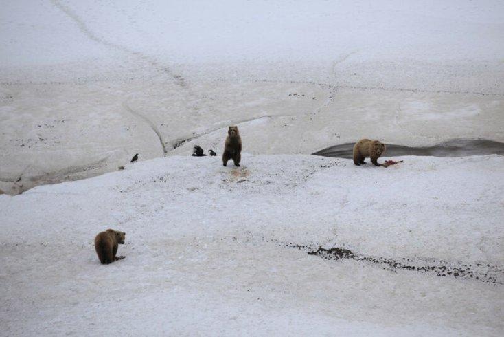 Всемирный день животных и потрясающие снимки дикой природы