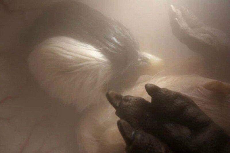 Зародыши животных в утробе матери: невероятные фотографии