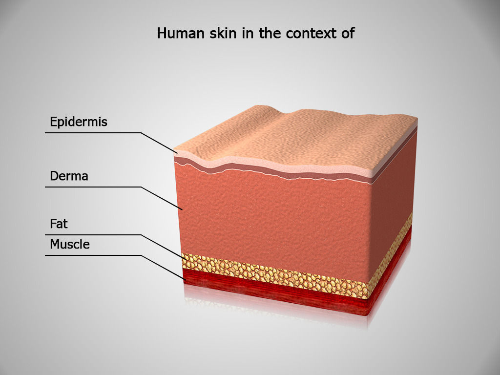 Skin Anatomy Human Skin In The Context Of 3d Model Game