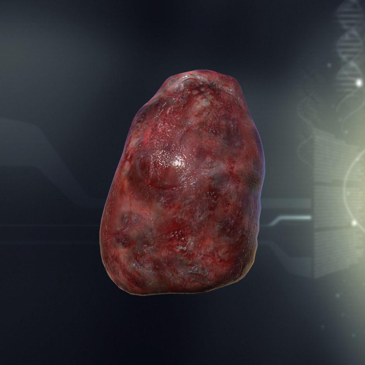3d Model Human Spleen Anatomy Vr Ar Low Poly Max Obj 3ds Fbx C4d Lwo Lw Lws