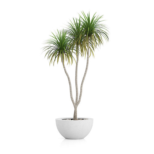 Potted Palm TreePotted Palm Tree 3D Model MAX OBJ FBX C4D