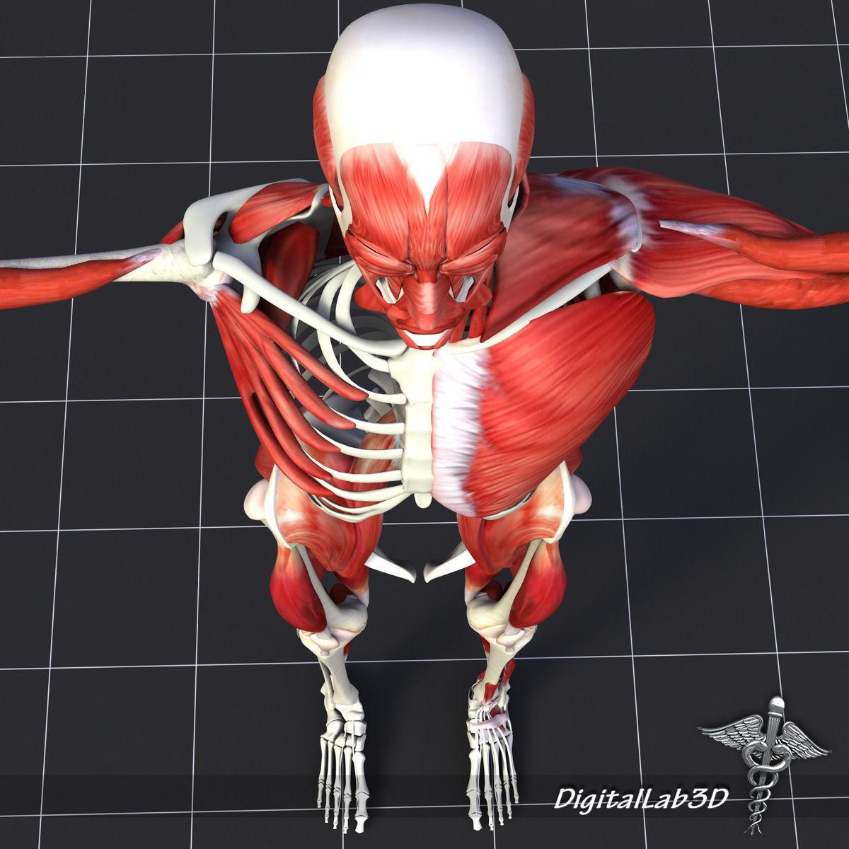 Human Muscle And Bone Structure 3d Model Max 3ds Fbx C4d