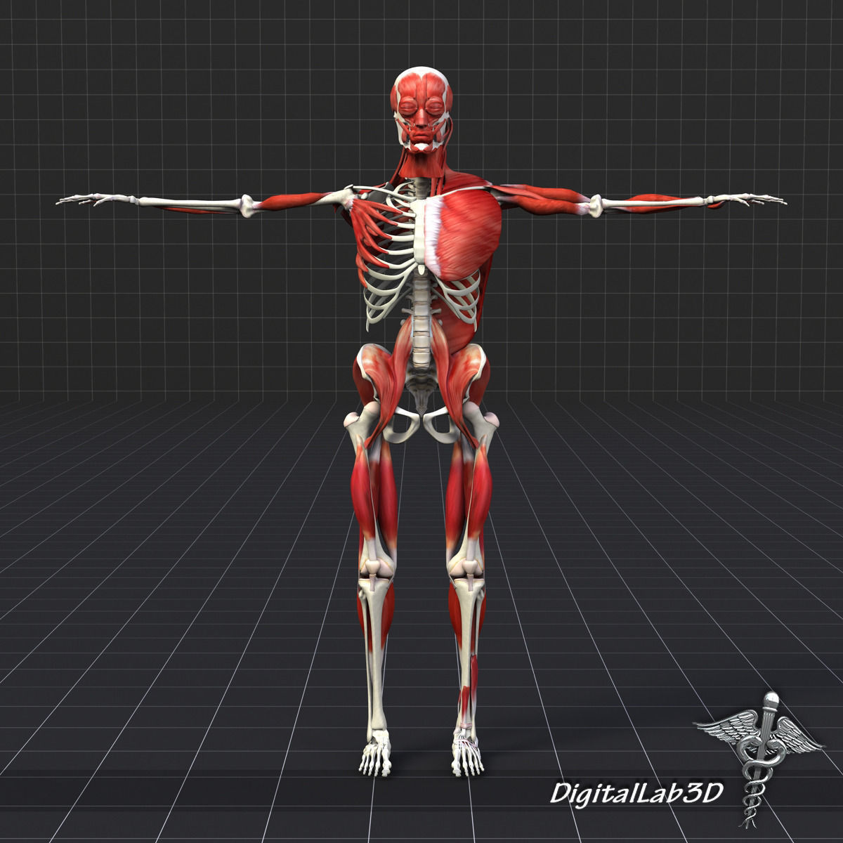 Human Muscle And Bone Structure 3d Model X 3ds Fbx