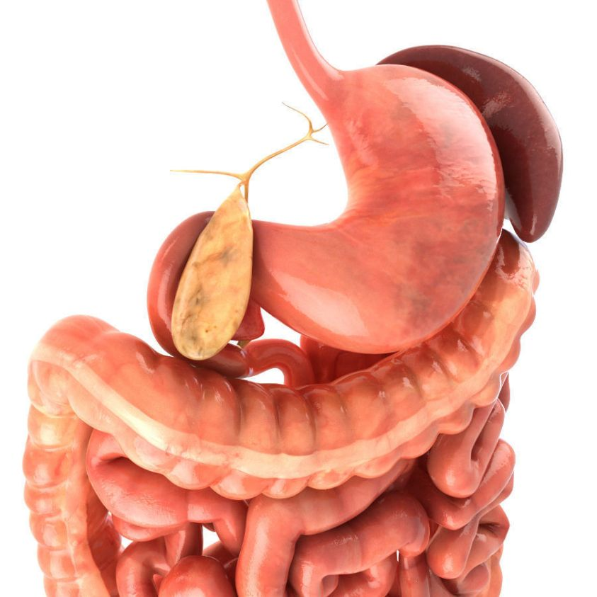 3D model Digestive system Animated VR / AR / low-poly ...