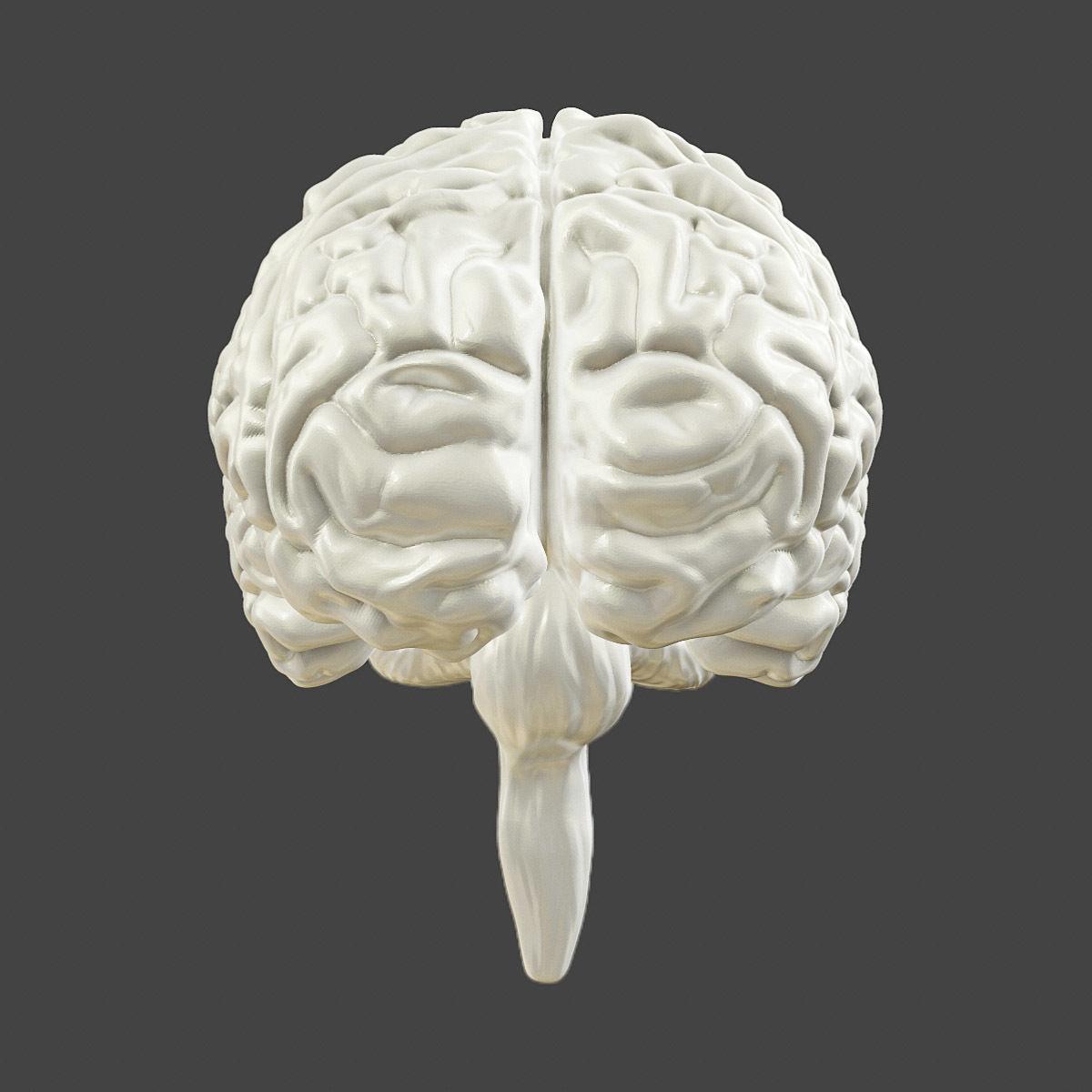 Printable Accurate Human Brain 3d Model 3d Printable Obj