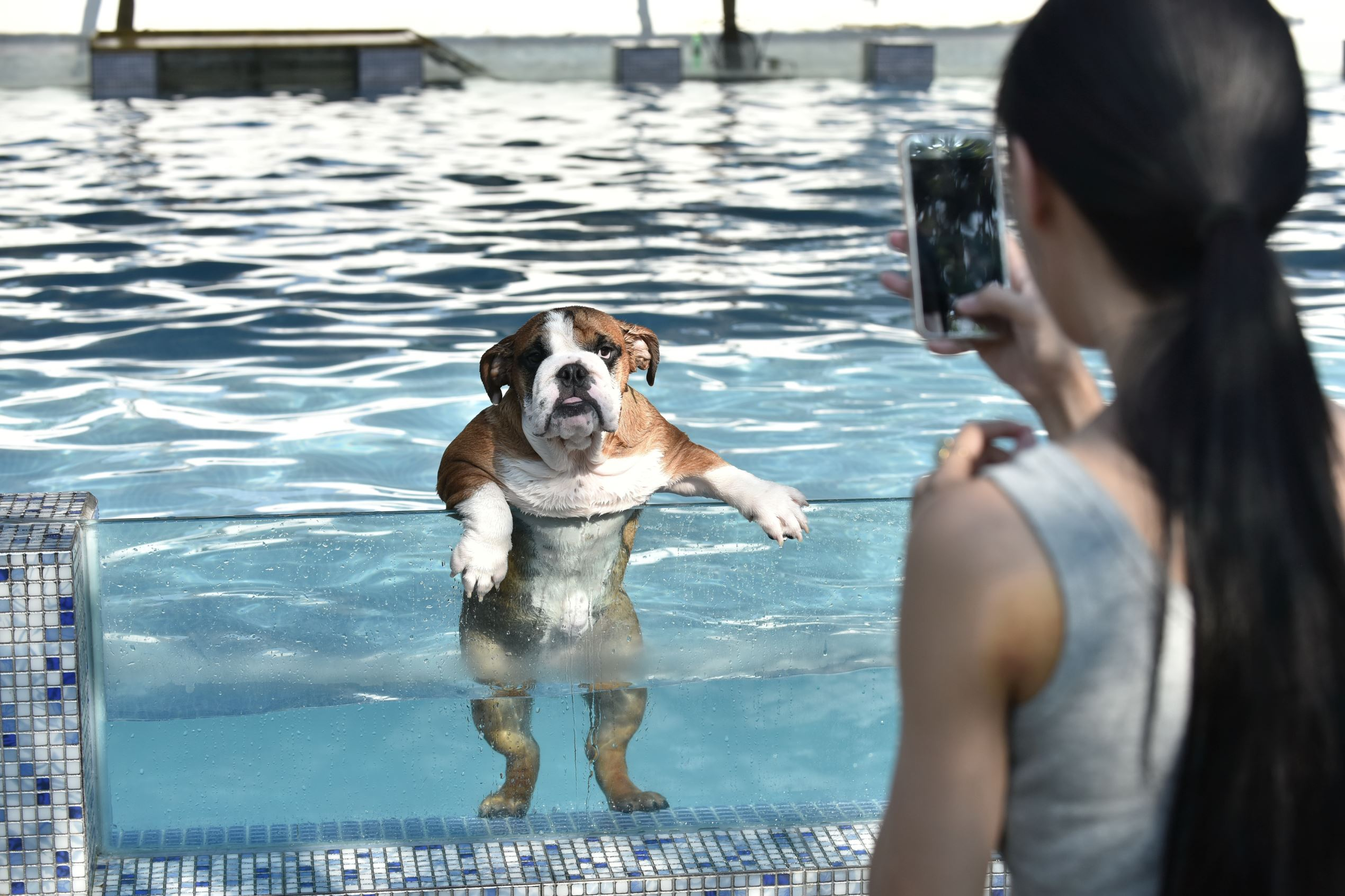 Слайд 17 из 67: An owner takes a picture of her dog as it climbs up on a glass panel while swimming at a pool for dogs in Chengdu, Sichuan Province, China, August 16, 2016.