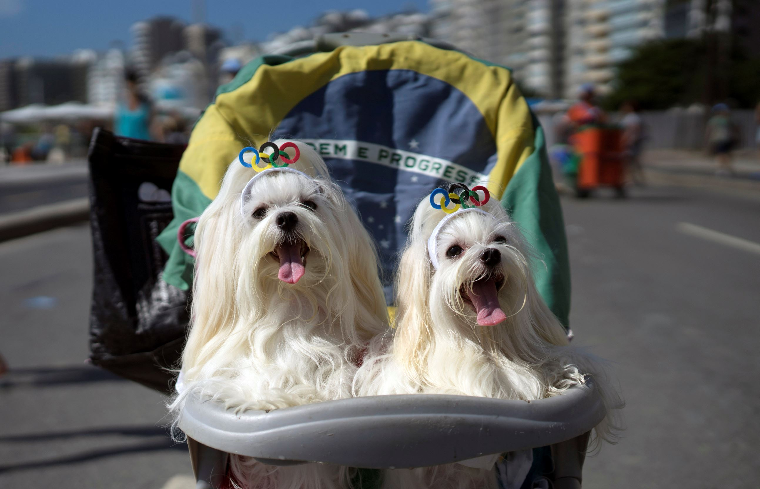 Слайд 56 из 67: Dogs wearing Olympics ring headbands ride in a stroller at a carnival pet parade in Rio de Janeiro, Brazil, Sunday, Jan. 31, 2016. People dressed up their pets in costumes for the annual block parade near Copacabana beach. (AP Photo/Leo Correa)
