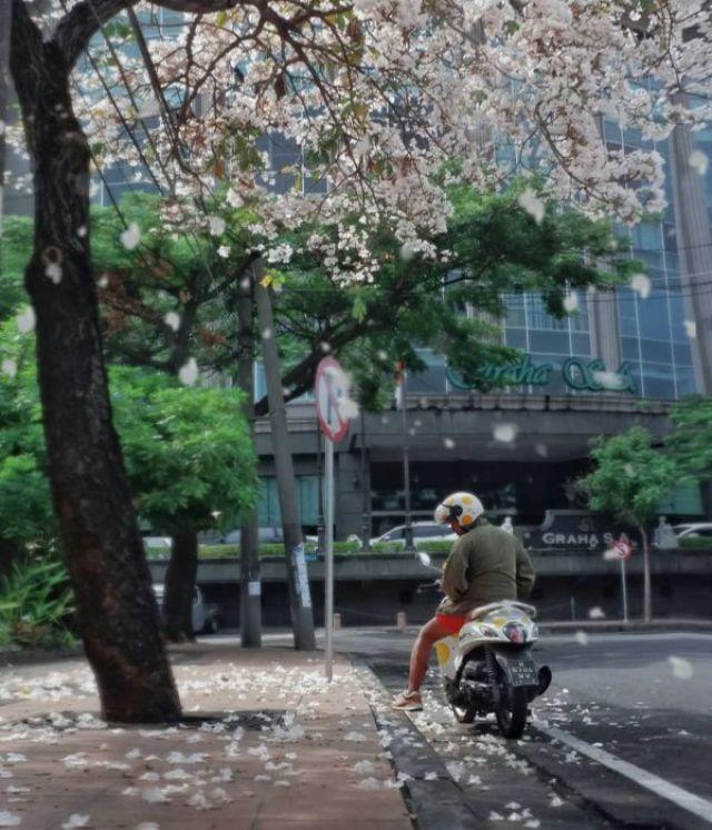 Image result for bunga tabebuya