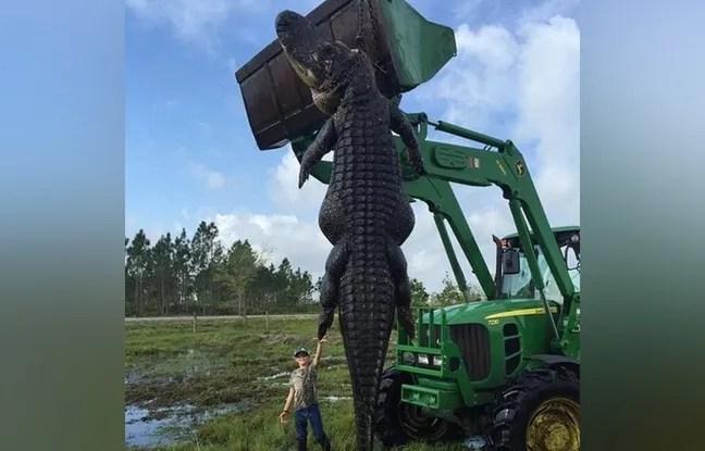 Le fils de Lee Lightsey pose devant un alligator géant abattu par son père.