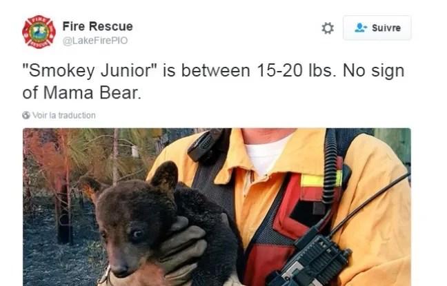 Le petit ourson ne souffre que de brûlures superficielles.