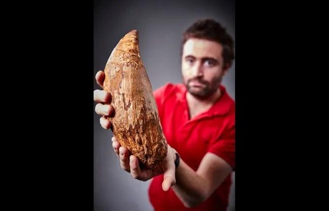 Cette énorme dent de cachalot, vieille de 5 millions d'années, a été retrouvée sur une plage australienne.