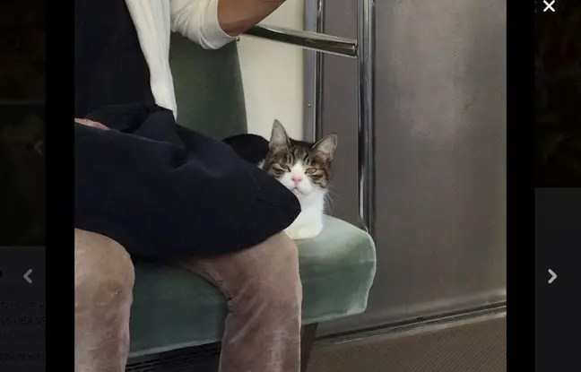 Chat qui m'aiment prendront le train.