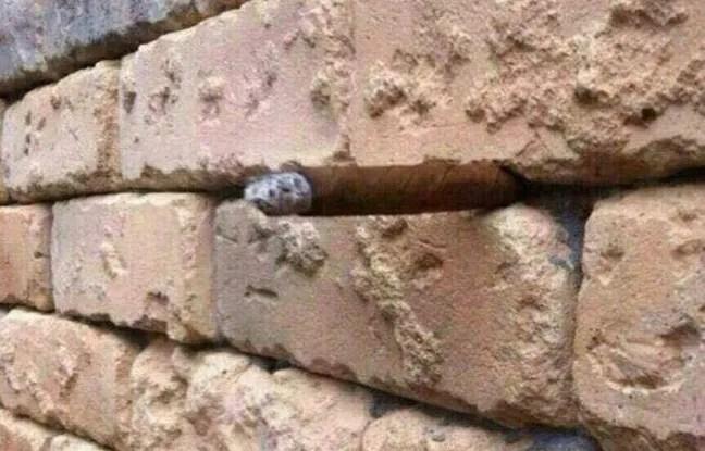 Un mur de briques, et une surprise au milieu.