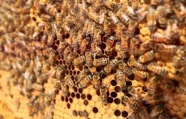 Ruche d'abeilles (illustration).