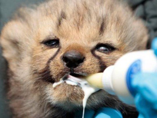 حماية الحيوانات من الانقراض - عين