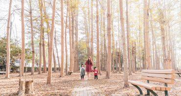 【善化景點/善化秘境】善化糖廠旁細葉欖仁|夢幻樹林超好拍|溪美社區森林公園