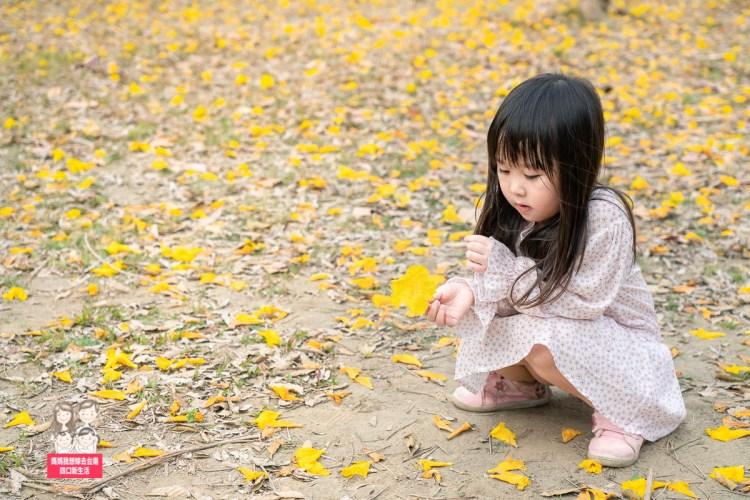 【台南景點】金色花海的季節!! 美美的~ 台南億載公園黃花風鈴木!!