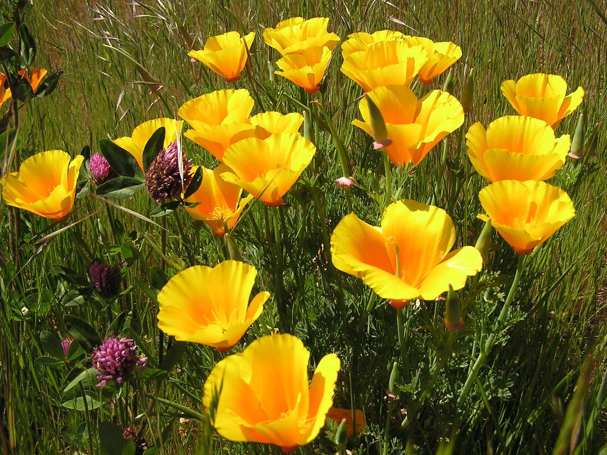 какие цветы любят песчаную почву с фото этот вопрос