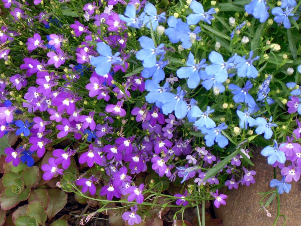 Cosa Seminare A Gennaio quali fiori sono piantati nelle piantine in gennaio e