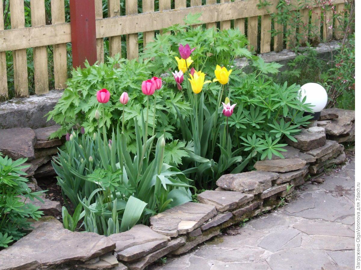 Come Si Piantano I Tulipani cesto per lampadine fai-da-te. qual è il vantaggio di