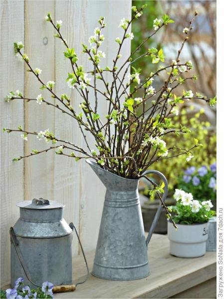 Вишню отличают нежно-белые цветы и зеленые кончики листочков