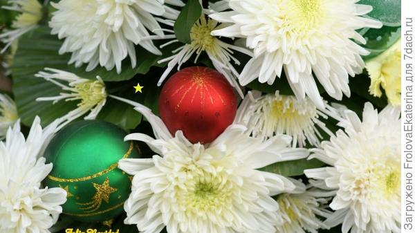 Хризантемы на Рождество. Фото с сайта fondos-escritorio.org