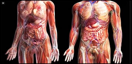 3D human anatomy. Videos of the human body apk