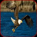 Eagle Images Icon