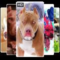 Pitbull Dog Wallpapers HD 2019, Dog Wallpapers Icon