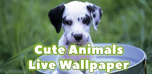 Cute Animals Live Wallpaper apk