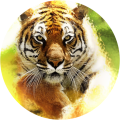 Tiger Waves Live Wallpaper Icon