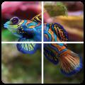 Puzzle Fish for children Icon