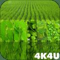 4K Green Colored Stylish Video Live Wallpaper Icon
