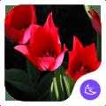 Gorgeous-APUS Launcher theme Icon