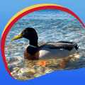 Great Ducks Live Wallpapers Icon
