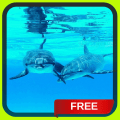 Dolphins Live Wallpaper LWP Icon