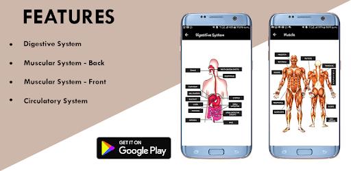 Human Anatomy Bones and Internal Organs Anatomical apk