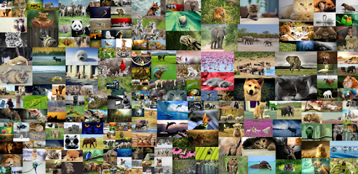 Animal Sounds HD (Free) apk