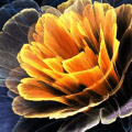 Animated Flower Live Wallpaper Theme Background Icon