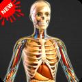 Human Anatomy Bones and Internal Organs Anatomical Icon