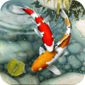 KOI Fish Live Wallpaper : New Fish Wallpapers 3d Icon