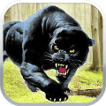 Black Panther Sniper Shooter Icon