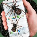 Spider in phone funny joke Icon