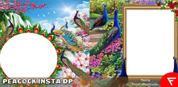 Peacock Insta DP apk